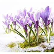 """Набор для вышивания бисером Матрёнин посад """"Песня весны"""""""
