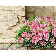 """Канва/ткань с нанесенным рисунком М.П. Студия """"Флоренция в цвету"""""""