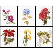"""Набор для вышивания крестом Thea Gouverneur """"Шесть цветочных исследований"""""""