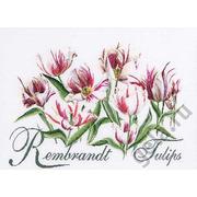 """Набор для вышивания крестом Thea Gouverneur """"Рембрандт, Тюльпаны"""""""