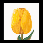 """Набор для вышивания крестом Thea Gouverneur """"Желтый тюльпан"""""""