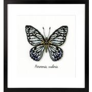 """Набор для вышивания крестом Vervaco """"Голубая бабочка"""""""
