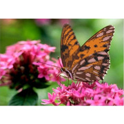 """Канва/ткань с нанесенным рисунком Каролинка """"Бабочка на цветке"""""""