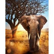 """Набор для выкладывания мозаики Алмазная живопись """"Африканский слон"""""""