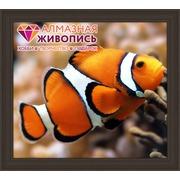 """Набор для выкладывания мозаики Алмазная живопись """"Рыбка клоун"""""""