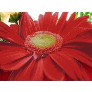 """Канва/ткань с нанесенным рисунком Глурия (Астрея) """"Красный цветок"""""""